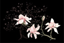 Magnolias animated Flash ecard