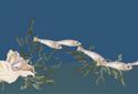 From Sea to Shining Sea animated Flash ecard