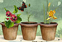 Flowerpots animated Flash ecard