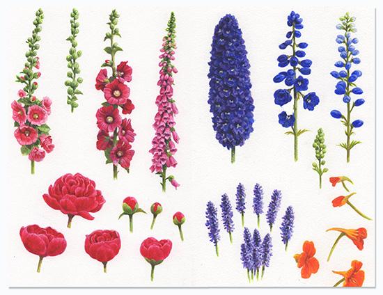 Garden Illustrations